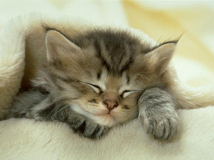 sleeping-cat2