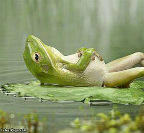 Relaxing_Frog