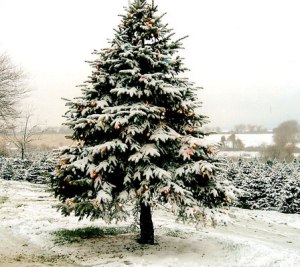 christmas_tree_with snow