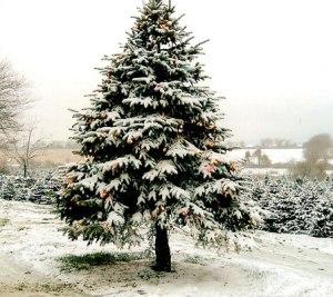 christmas_tree_with snow