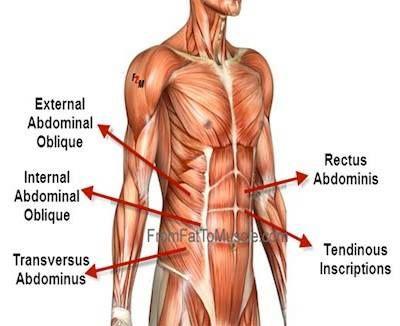 core muslces