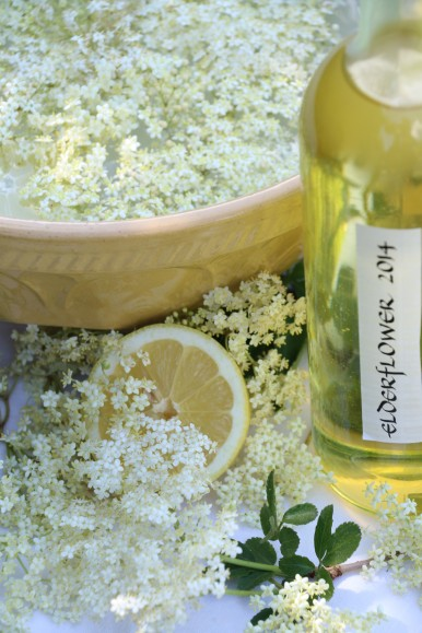 elderflower-champagne-in-the-making